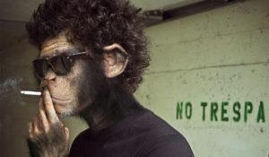 Shazam deja de ser el último mono del marketing para convertirse en el rey de la manada