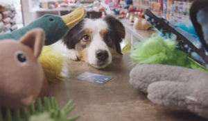 ¿Qué pasaría si los perros fueran tan impulsivos al comprar como los humanos? Vea este spot