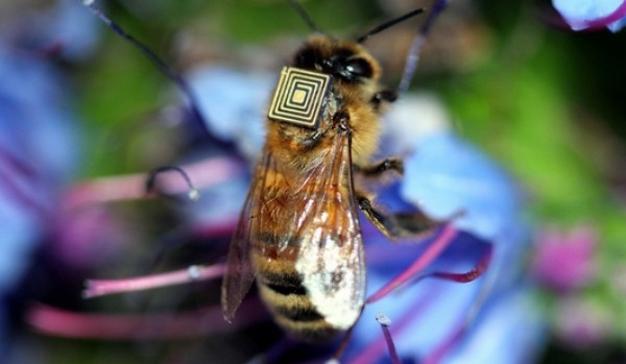 abejas intel chip