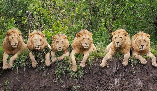 Cannes Lions: ¿demasiados leones para tan poca carne?