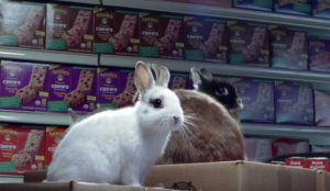 El supermercado repleto de dulces conejos de este spot le provocará un subidón de azúcar