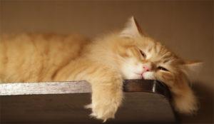 9 síntomas de que la productividad le ha dejado en la estacada (una vez más)