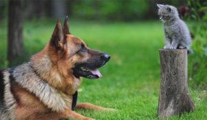 Agencias y clientes se llevan (cada vez más) como el perro y el gato