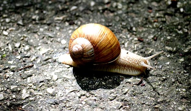 caracol-lento