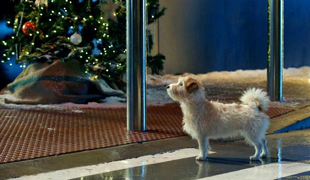 perro-navidad