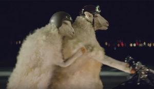 Unas graciosas ovejas motorizadas protagonizan este