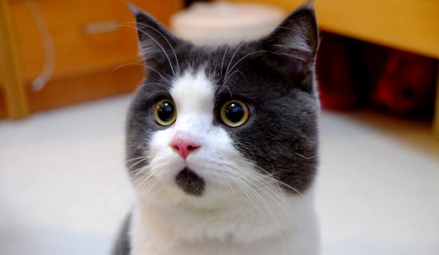 gato-jpeg