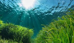 Loewe estrena campaña para la protección del ecosistema marino
