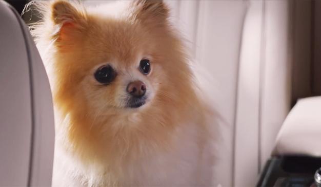 Un chófer vs un perro demasiado travieso: el anuncio viral de Hyundai