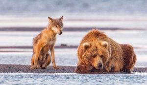 Instagram quiere ayudar a preservar la fauna salvaje
