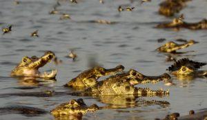 Unos ansiosos cocodrilos protagonizan la campaña de compromiso O'Clock de Domino's Pizza