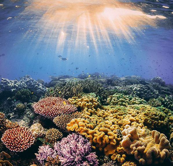 """WWF muestra la realidad """"sin filtros"""" del cambio climático en su nueva campaña #TooLaterGram"""