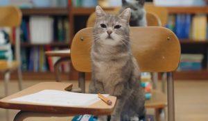 Los gatos son buenos multiplicando, pero malos en matemáticas, según esta campaña