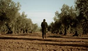 DDB España crea 'Taste the Truth', una campaña para promocionar los Aceites de Oliva de España en EE.UU.