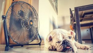 15 tuiteros que le aportarán un soplo de aire fresco marketero este verano