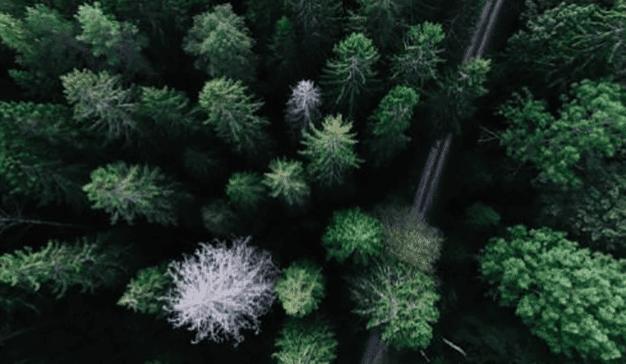 Laboratorios de datos: árboles para ver mejor el bosque