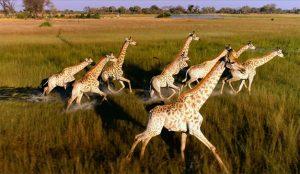 En este bellísimo poema publicitario los drones son guardianes de la fauna africana