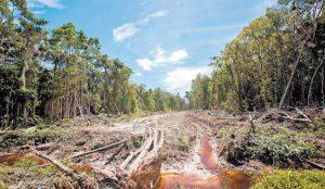 Nestlé se une a la lucha contra la deforestación