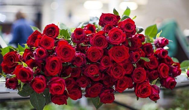 Room Mate Hotels y Aleia Roses celebran el amor en San Valentín