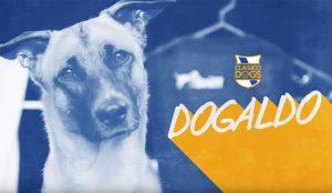 Esta campaña crea una versión perruna del Clásico para concienciar sobre la adopción de animales