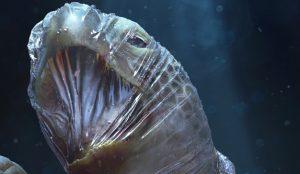 Esta campaña muestra la cruda realidad del impacto del plástico en los océanos