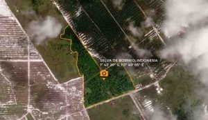 TRAPA salva una parte de la selva de Borneo, donde grabó el documental