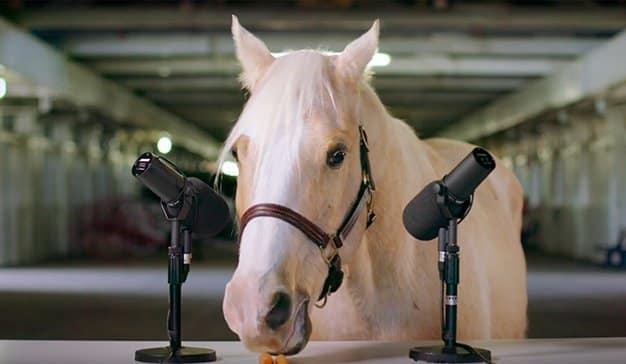 caballo-asmr