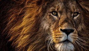 La 66ª edición de Cannes Lions inaugura 5 días de aprendizaje, inspiración y networking