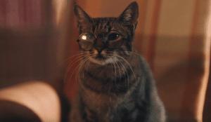Whiskas crea el único asistente virtual que no da respuestas