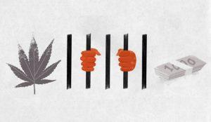 Una iniciativa para la justicia cannábica se anuncia en el especial sobre la esclavitud del NY Times
