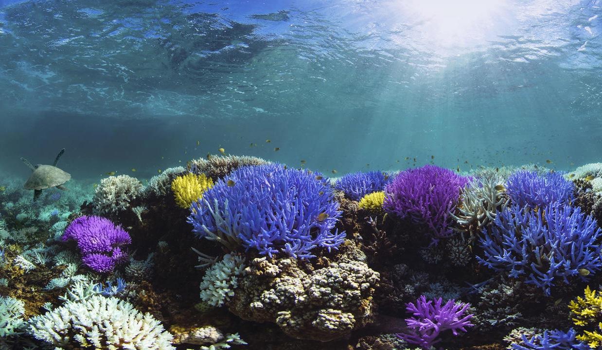 coral arrecifes