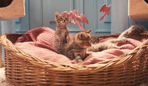 Eon celebra el Día Mundial del Gato con un vídeo muy felino