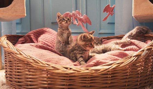 gatos-eon