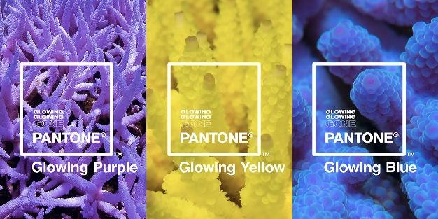 campaña Pantone
