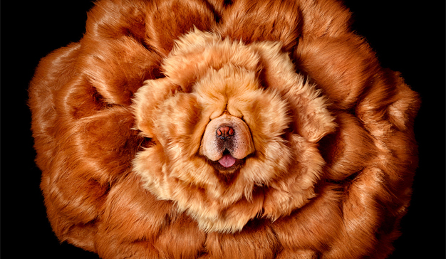 La lucha a cara de perro de agencias y anunciantes por el talento