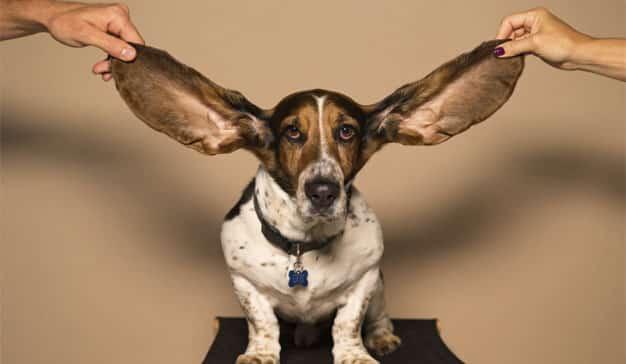 GAES recurre al contexto político para recordar la importancia de la audición