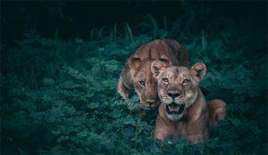Vetan en Sudáfrica un anuncio de Volkswagen que compara a las mujeres con animales salvajes