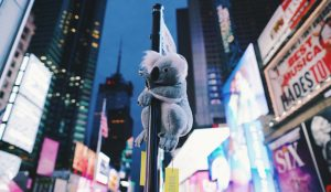 Nueva York se llena de koalas para concienciar sobre la devastadora situación de Australia e impulsar las donaciones