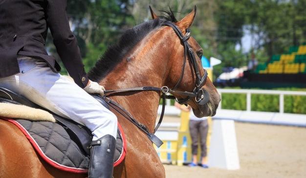 La publicidad caballo ganador en la carrera de la calidad