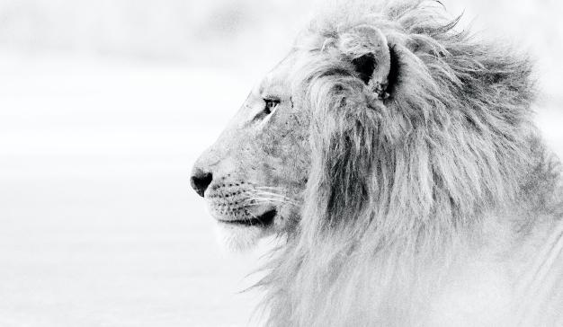 Cannes Lions se cancela: ¿Qué supone para la industria publicitaria?