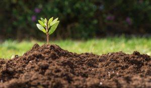 #TendenciaAlCambio o cómo YouTube aporta su granito de arena en cuidar el medio ambiente