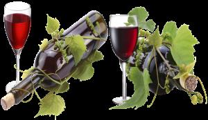 Vinos.Wine, el primer comparador de vinos online en castellano