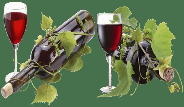 Vinos.Wine