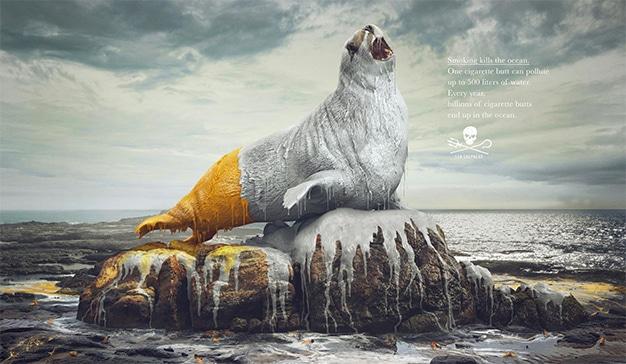 sea sepherd