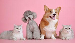 ¿Se llevan las agencias y los anunciantes como el perro y el gato? Cómo limar asperezas