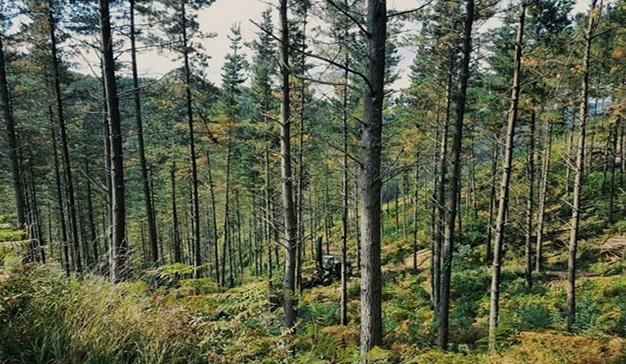 Central forestal