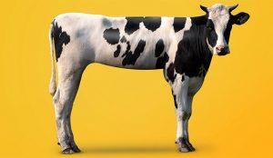 Las 3 cualidades más valiosas de un líder con mayúsculas en épocas de vacas flacas