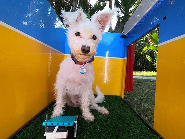 fotomaton para perros