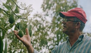 Un estímulo para la eliminación de 2.000 plantas ilegales de aguacate en la Sierra de Bahoruco en República Dominicana