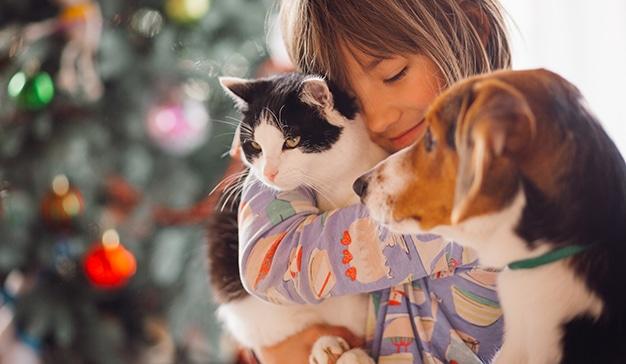 affinity fundacion mascotas campaña de navidad